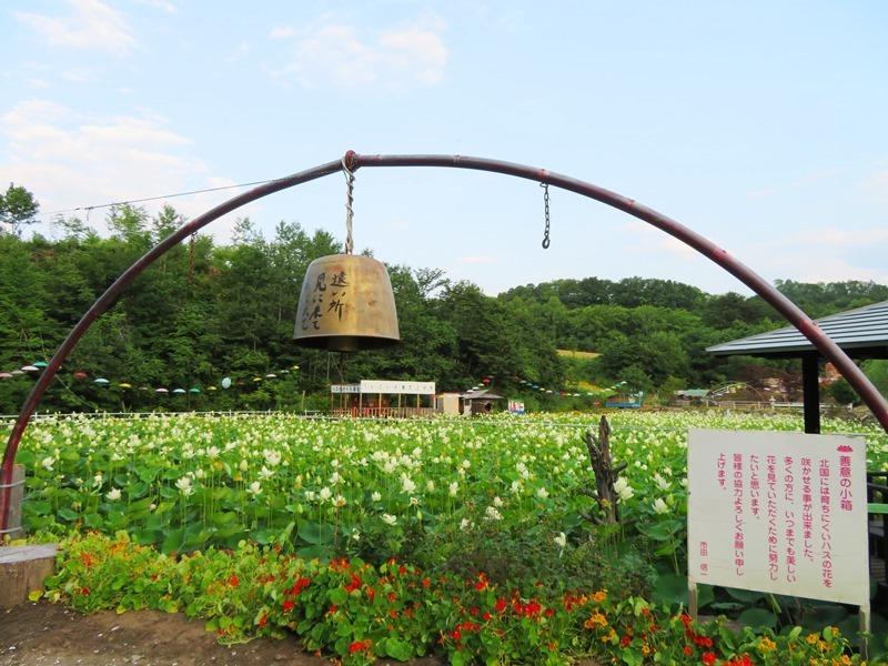 20190805最北のハス池11.JPG